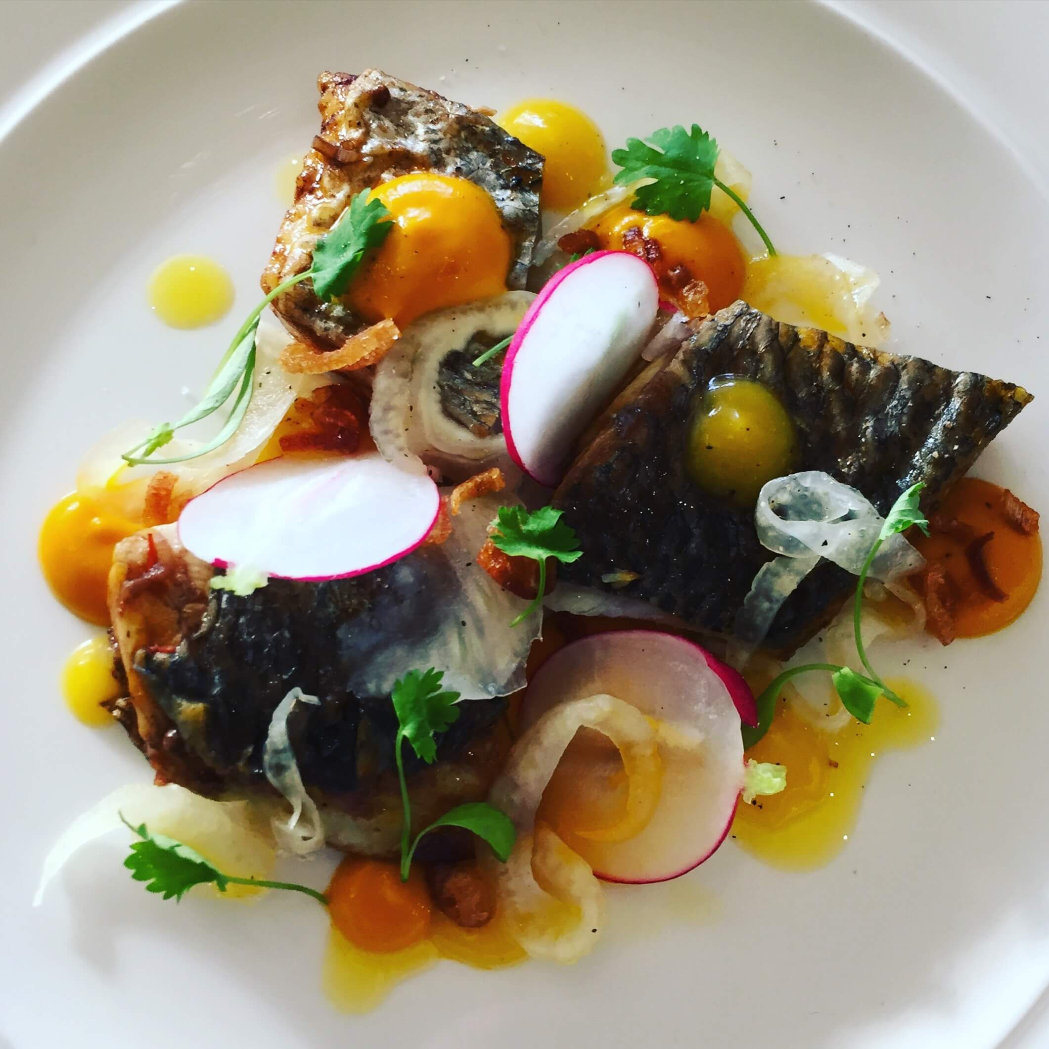 pan-fried-mackerel-fennel-and-orange