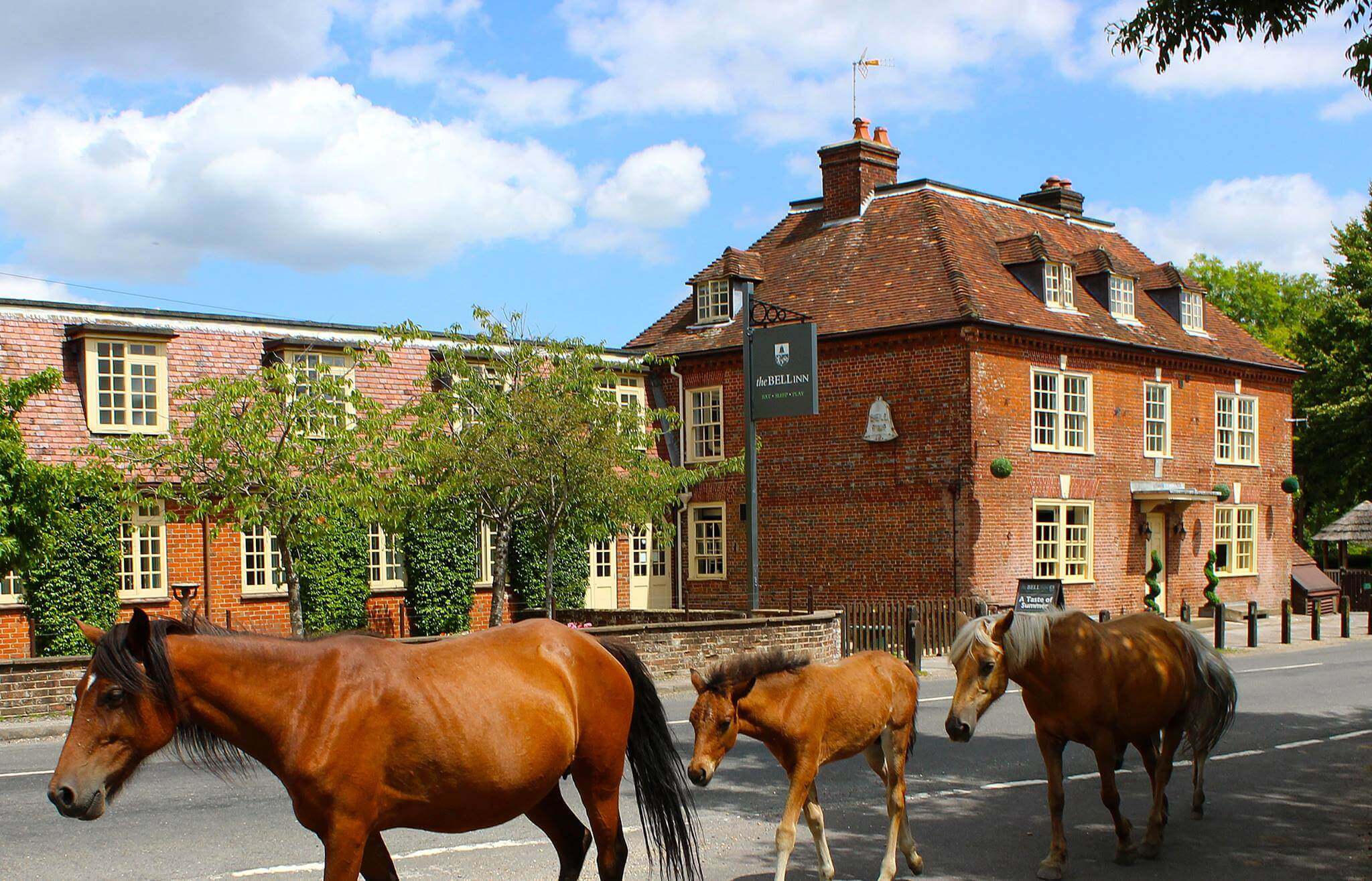 Perfect Weekend: 48-Hours in the New Forest with Mini, new forest travel guide, what to to do in new forest, where to stay in the new forest, new forest stay, where to stay in new forest, staying in the new forest, new forest where to stay, where to stay new forest,