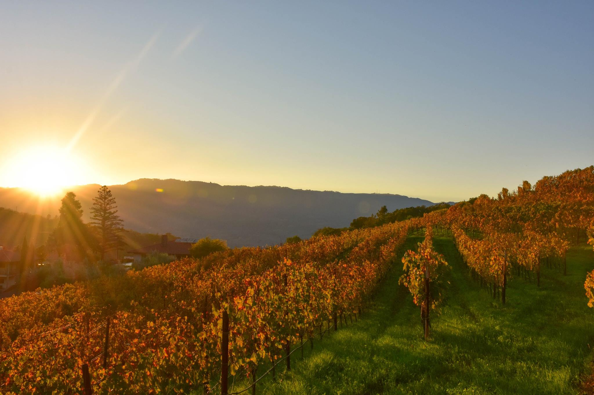 48-Hours in Sonoma, what to do in sonoma, where to stay in sonoma, where to eat in sonoma, sonoma travel guide