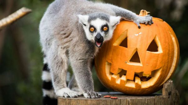 Halloween Events in London, Halloween Events London, best Halloween Events in London, top Halloween Events in London, Halloween Events in London 2019