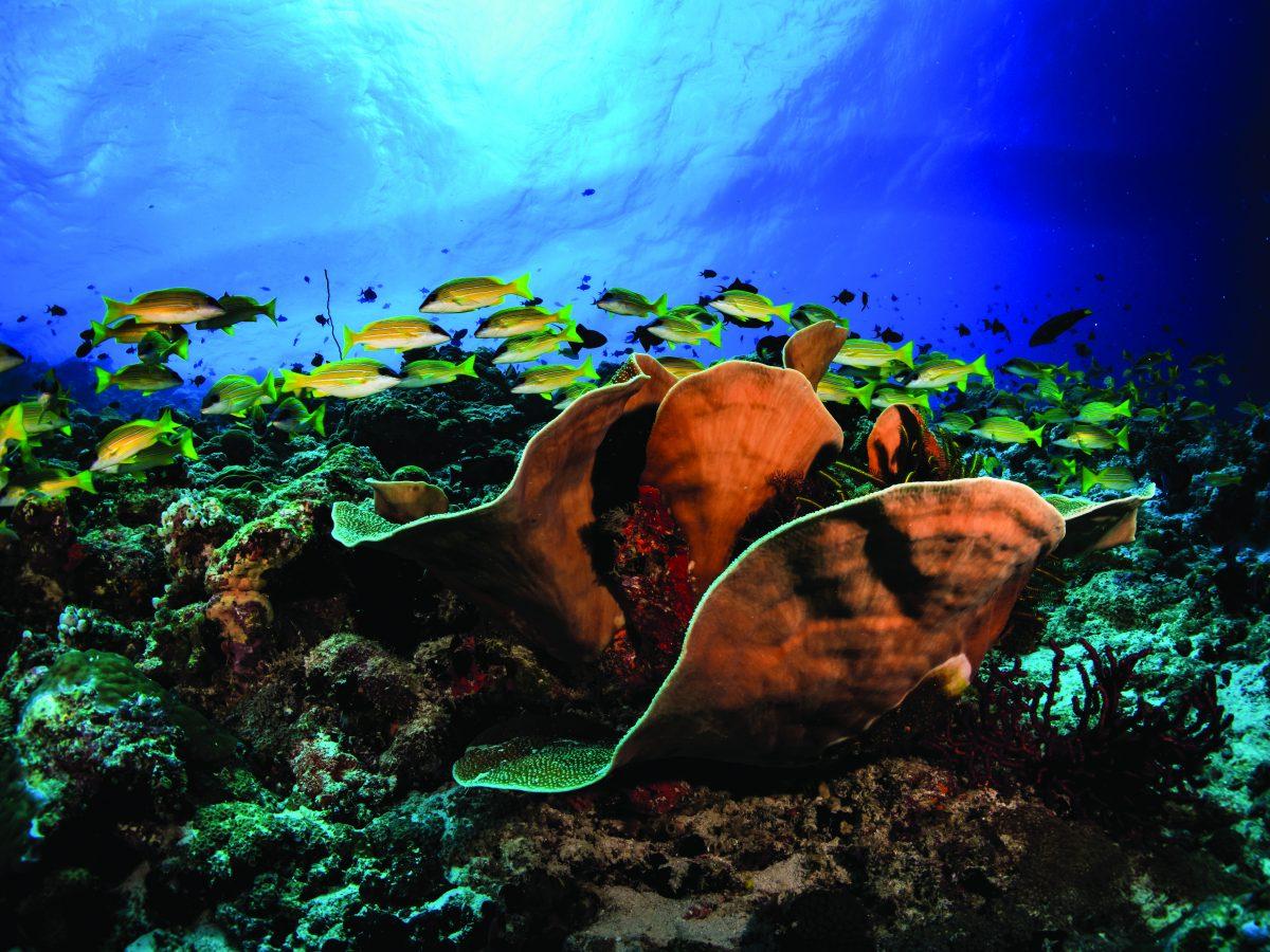 OBLU Select hotel coral