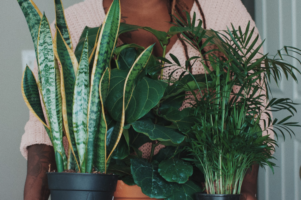 how to care for a houseplant, care for a houseplant,  houseplant tips