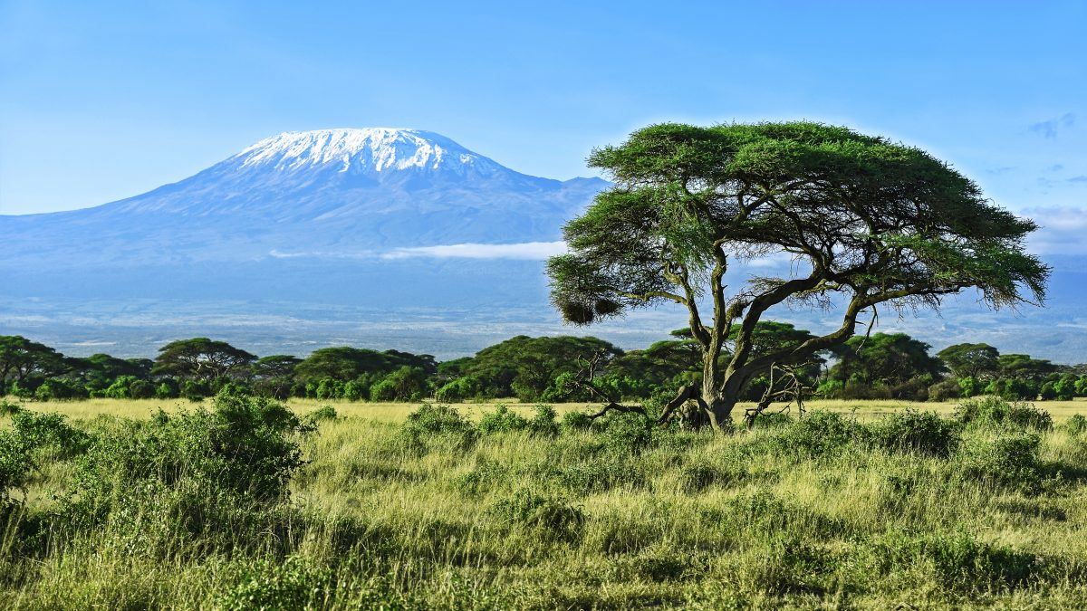 Mount Kilimanjaro in the background behind a field and green trees
